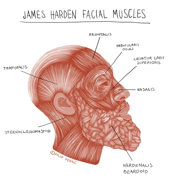 James Harden 'Hardenalis Beardoid' Medical Illustration